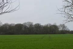 Shinfield Fields 2