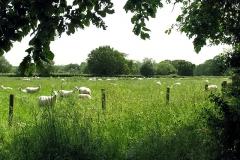 Shinfield Fields 3