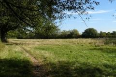 Shinfield Fields